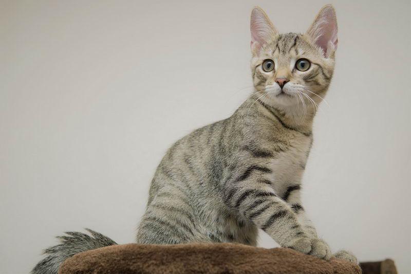 猫咪的口水不一定是造成人体过敏的原因