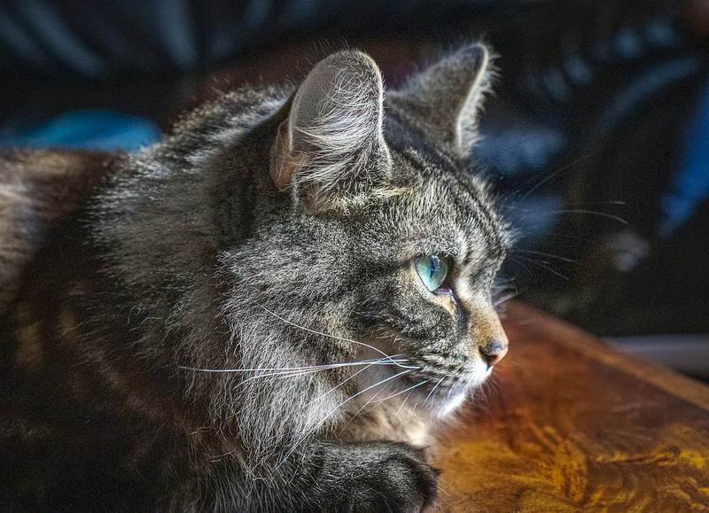 须判断过敏是否因接触猫咪,若接触干净的猫咪而无过敏反应,便可排除猫咪为过敏因素