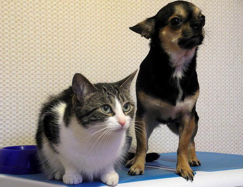 猫咪狗狗误食有毒物质以后,我们要不要做催吐,如何做?