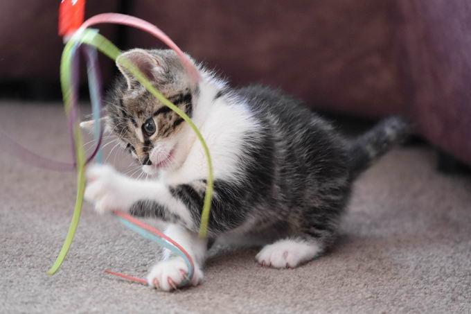 猫咪智商测试方法:快来看看你养的是一个爱因斯坦猫还是一个傻猫