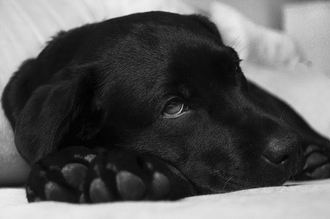 生病的狗狗可以吃哪些食物?鸡汤鸡肉骨头汤南瓜都适合