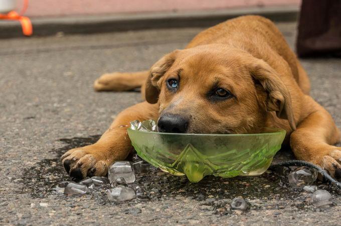 炎热的夏天能给狗狗吃冰块吗?吃冰块对狗有啥危险?