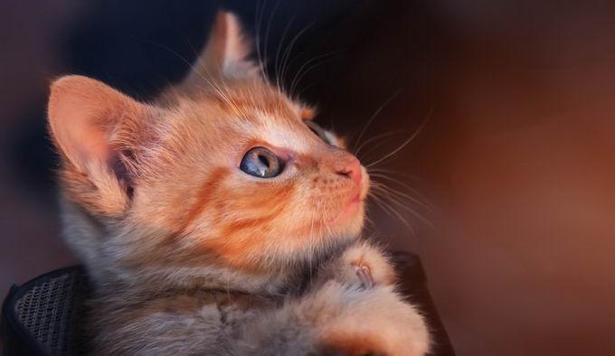 """0大常见猫咪行为误解"""""""