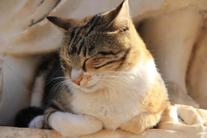 炎热的夏天里要如何让猫咪保持凉爽,避免中暑?