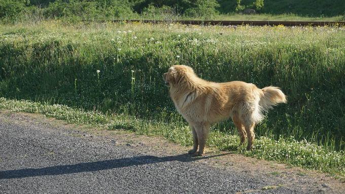 又热又湿的夏天要特别留意狗狗的皮肤问题